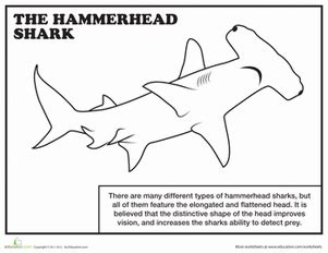 coloring page of a hammerhead shark hammerhead shark worksheet education com