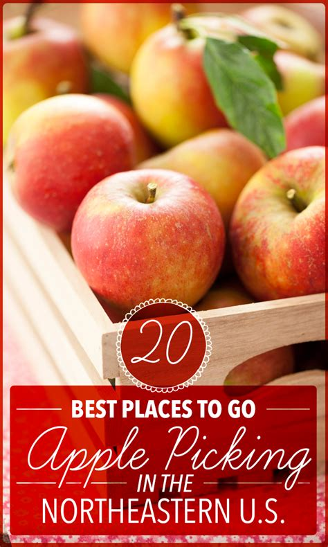 20 best places to go apple picking in the northeastern u s