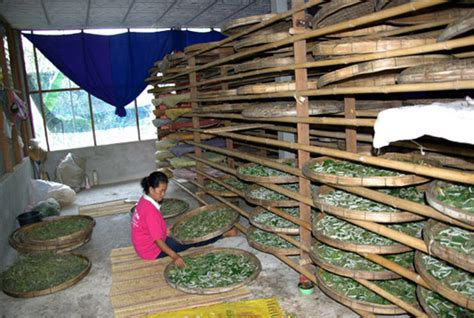 Made Egg Wormer India Eg001 silk step 1 raising silkworms and harvesting cocoons