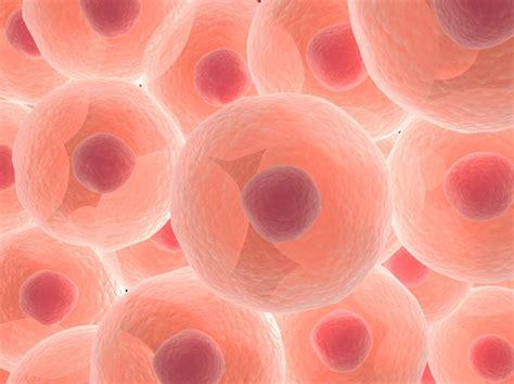 Wann Entstanden Die Ersten Lebewesen Mit Zellkern