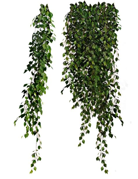 Bamboo Forest Wall Mural plants transparent clip art library