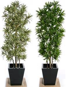 great desk plants plant for office desk indoor potted plants noida greater noida