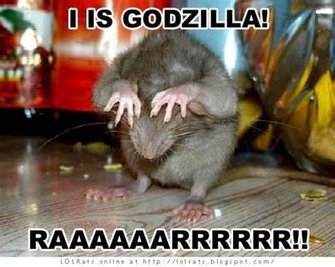 Rodent Meme - heehee it s rat zilla lol stuff with rats squeeeeeee