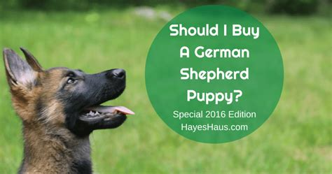 german shepherd puppies cost how much are german shepherd puppies cost photo