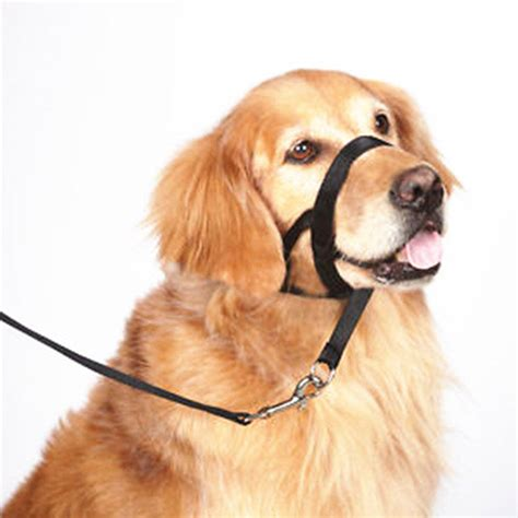 muzzle for small dogs adjustable muzzle with buckle and leash muzzle bark