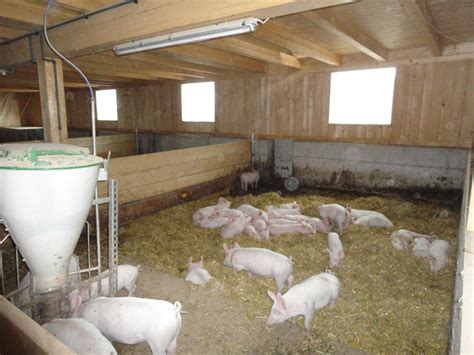 schweinestall bauen schachner holzbau stallungen