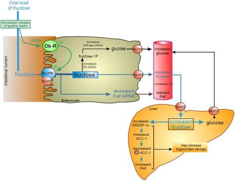 wiring diagram besides 1 volume tone led circuit diagrams