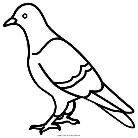 imagenes para dibujar de palomas paloma para colorear www pixshark com images galleries