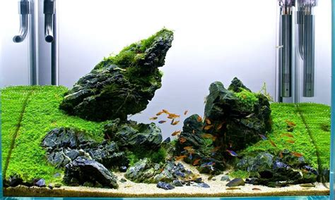 Aquascaping With Rocks by 2ft Seiryu Scape Pride Rock Aquascaping Inspiration