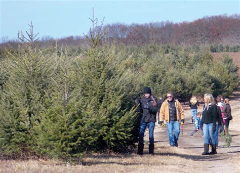 what makes a christmas tree pros cons of locally grown