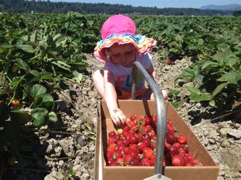 friendly pumpkin patch near me kid friendly strawberry picking farms in seattle