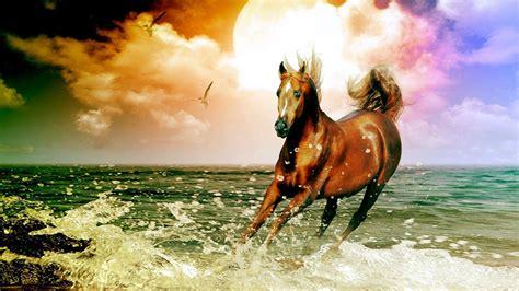 wallpaper for desktop of horses horse desktop wallpapers wallpaper cave