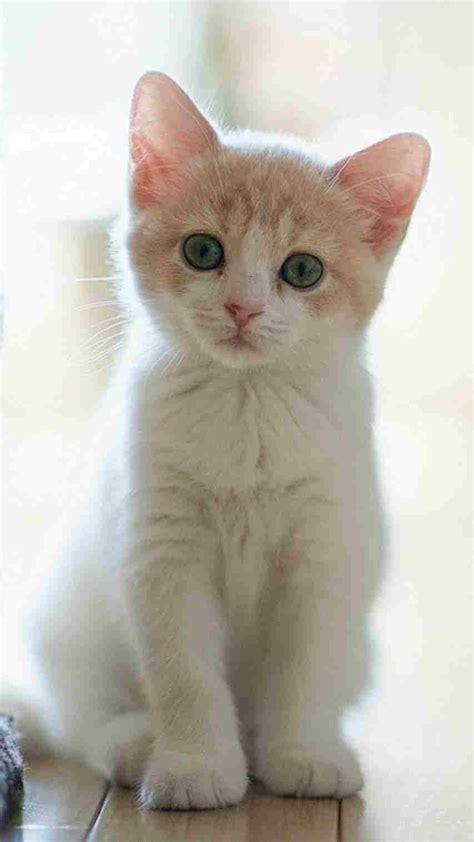 cute cats pics hd cats hd  cute cat hd wallpaper