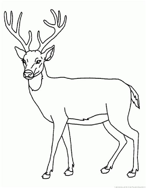 deer mouse coloring page deer coloring pages