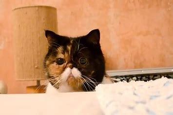 setelan peek a boo cat peek a boo cat