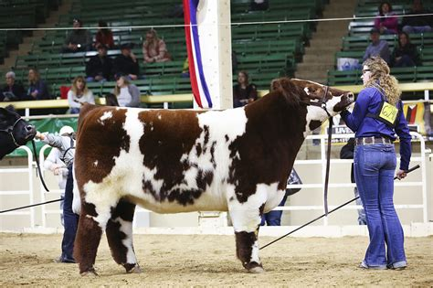 houston show colorado helps v8 ranch at the houston livestock show and rodeo thefencepost