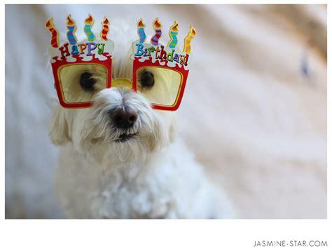 happy birthday puppy birthday quotes quotesgram