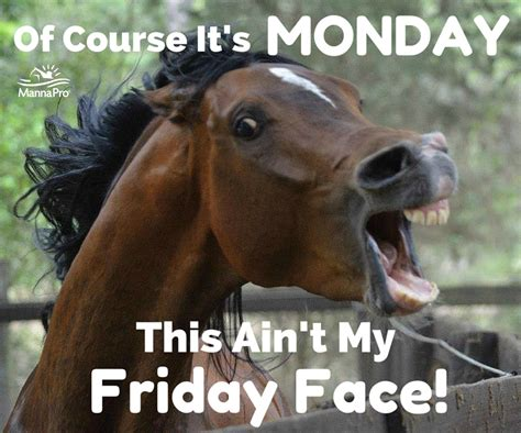 Meme Horse - happy monday funny horse sayings humor pinterest