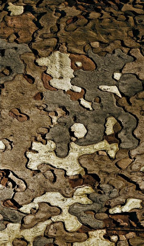 nature camo pattern 17 best images about nature s organic textures on