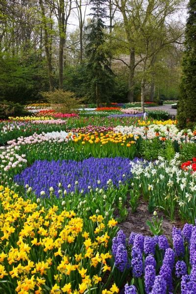 Flower Garden Pictures Free Colorful Flower Garden Free Stock Photos In Jpeg Jpg 853x1280 Format For Free 727 35kb