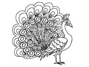 peacock coloring page printable peacock coloring pages coloring me