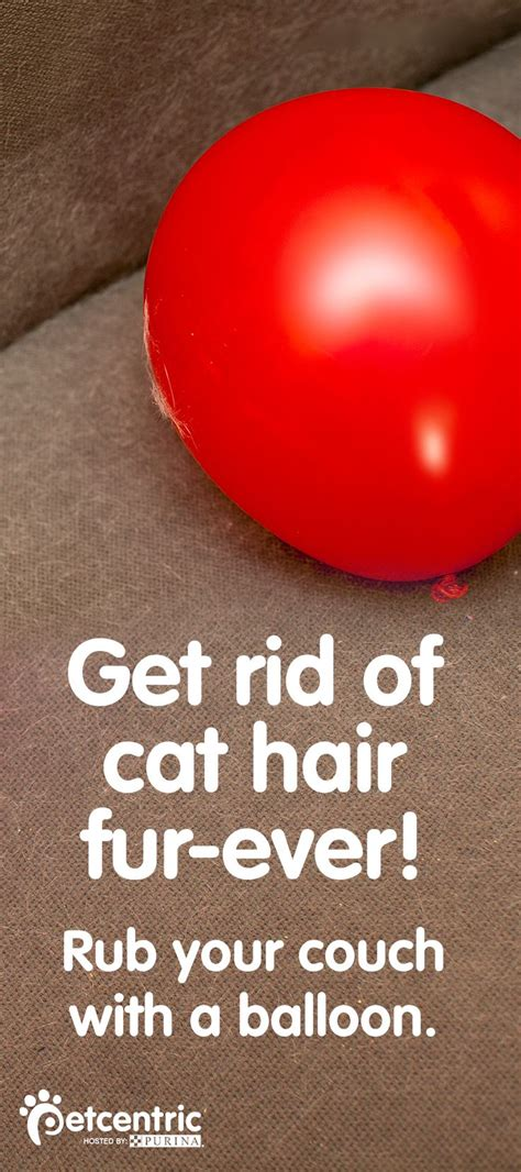 Detox Odor Dying Smell by 1000 Ideas About Remove Pet Hair On Urine
