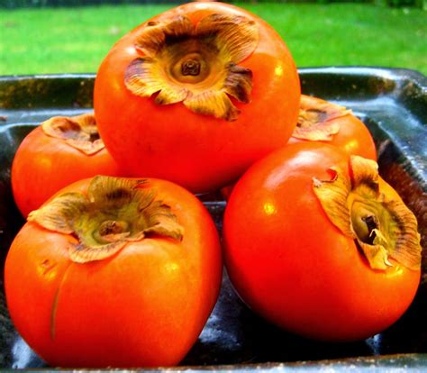 a fruit that looks like a tomato fruit that looks like a tomato but is orange images