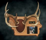 antler plaque template tietz taxidermy and wildlife lebanon wi