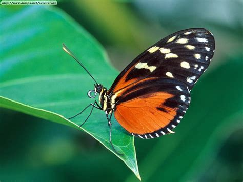 imagenes jpg mariposas fotos de mariposas i