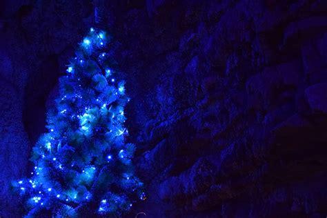 blue light tree kostenloses foto weihnachten weihnachtsbaum blau