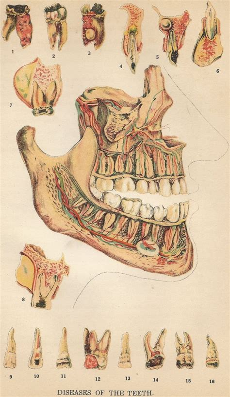 vintage illustration vintage medical illustration male models picture