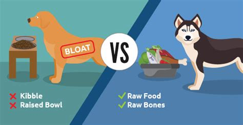 Adding Water To Puppy Food - preventing bloat in dogs naturally