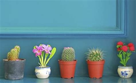 decorar jardin con plantas deserticas decorar con plantas de interior decoraci 243 n de interiores