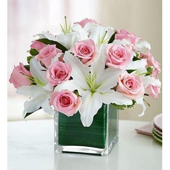 gambar bunga mawar indah holidays oo
