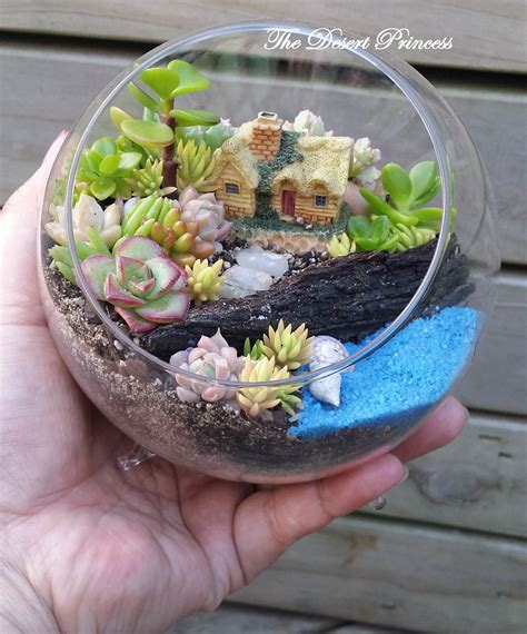 fairy terrarium succulent garden terrarium design by the desert princess chsbahrain