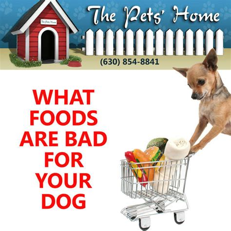 foods bad for dogs foods that are dangerous for dogs don t feed them these