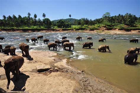 Country Style House Plans by Pinnawala Elephant Orphanage Sri Lanka Style Hi Club