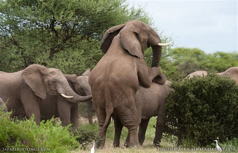 Elephant Matting by Northern Tuli Gr Photos Images Pictures