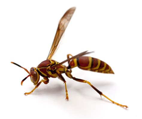 How To Make A Paper Wasp - students warned of wasps as weather turns colder