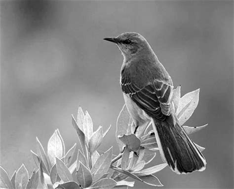 xto kill a mockingbird symbolism