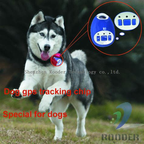 gps microchip for dogs high quality pet tracker gps tracking chip system tk888 keep your pet safe free