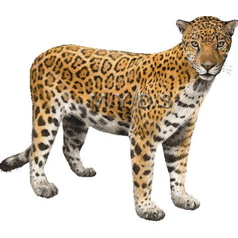 jaguar clipart free jaguar clipart pictures clipartix