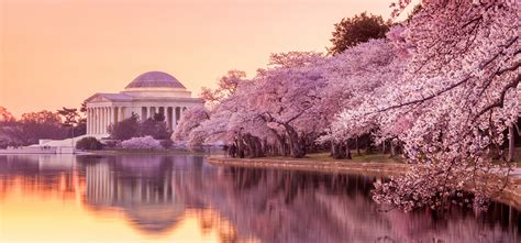 cherry blossom festival dc on being an immigration lawyer in washington dc benach