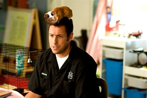 film lucu adam sandler photo de adam sandler histoires enchant 233 es photo adam