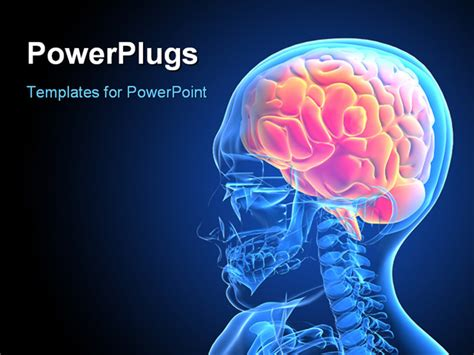 brain powerpoint templates free free brain powerpoint template casseh info