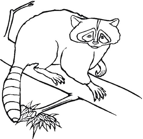 coloring page forest animals free coloring pages of forest animals