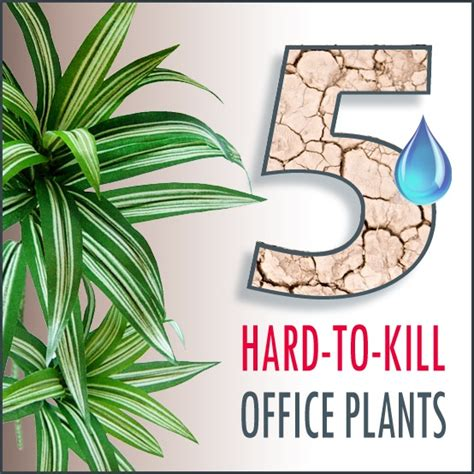 office plants no sunlight 5 hard to kill office plants greener on the inside