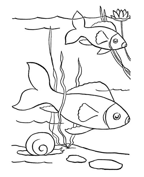 fish coloring book printouts free printable fish coloring pages for