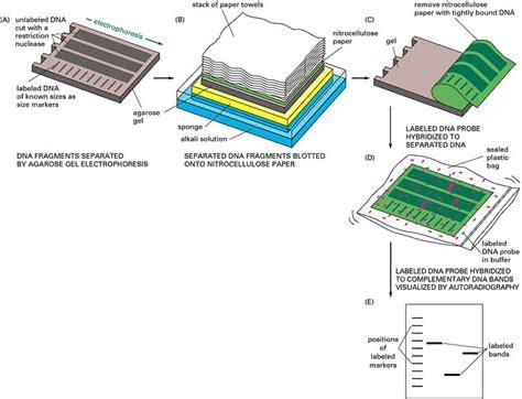 ladder logic diagram builder wiring diagram