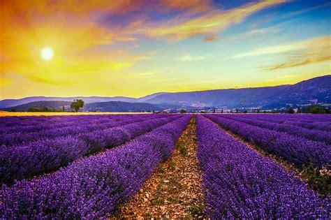 Lavendelfelder Provence by Malerische Lavendelfelder In Der Provence Urlaubsguru De